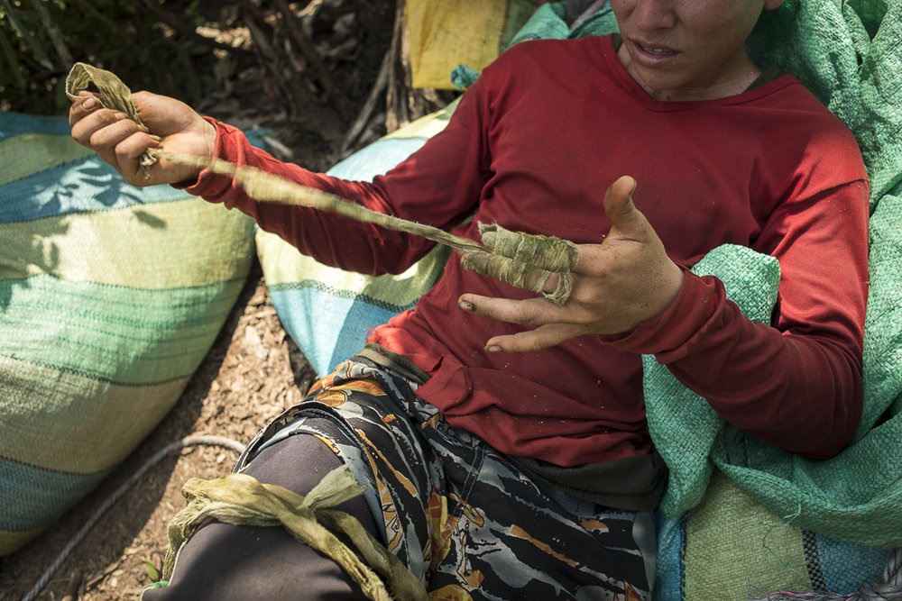 "A ""raspachino"", the coca-leaf picker, removes the gaze strips he used to protect his hands from the grupping-up. The coca is used to make the cocaïne. The peasants are croping the leaves to do the coca paste that they will sell thereafter. (January 21, 2016. Putumayo)"