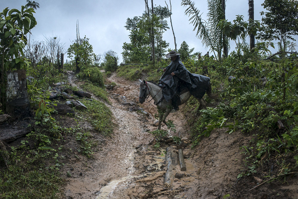 A peasant takes a muddy road that is pratically unusable for moto and car. Most of the people uses horses and mules to move and the first real road is at two days of journey. (July 24, 2016. South Caquetá