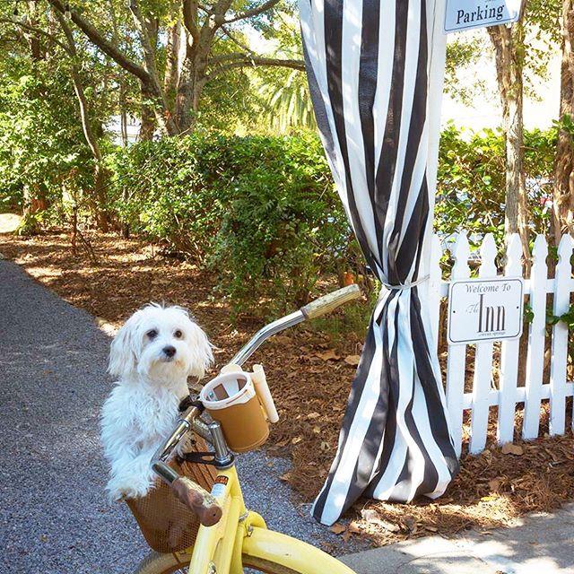 Pup Cruiser 🐶 #innguest #bikefriendly #downtown