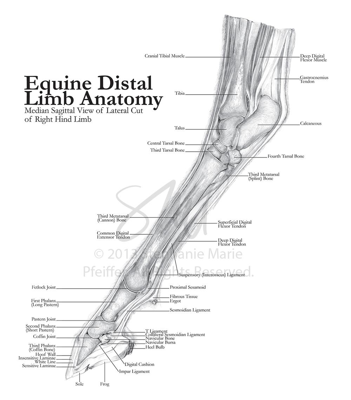 Scientific — SMP Illustration