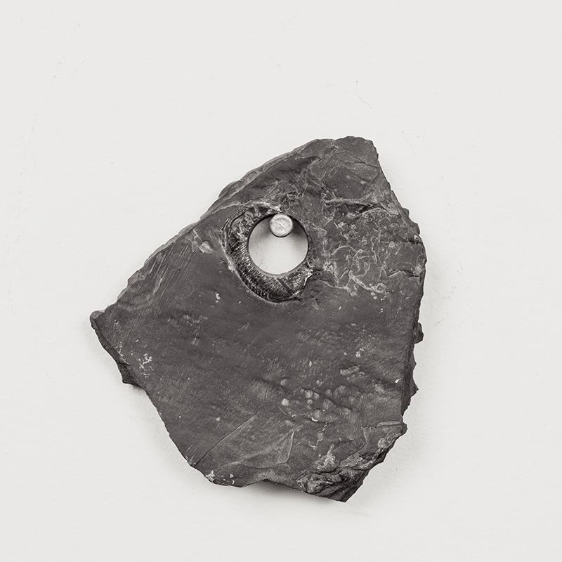 Fossils13.jpg
