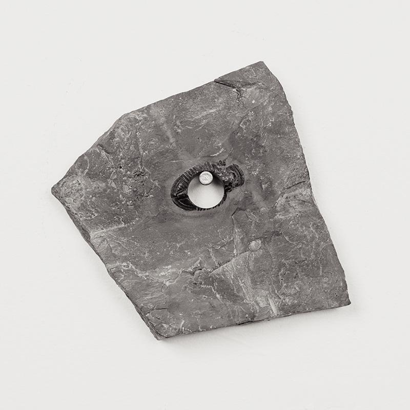 Fossils07.jpg