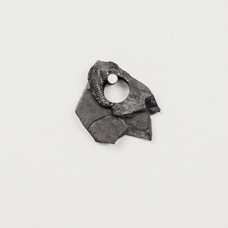 Fossils20.jpg