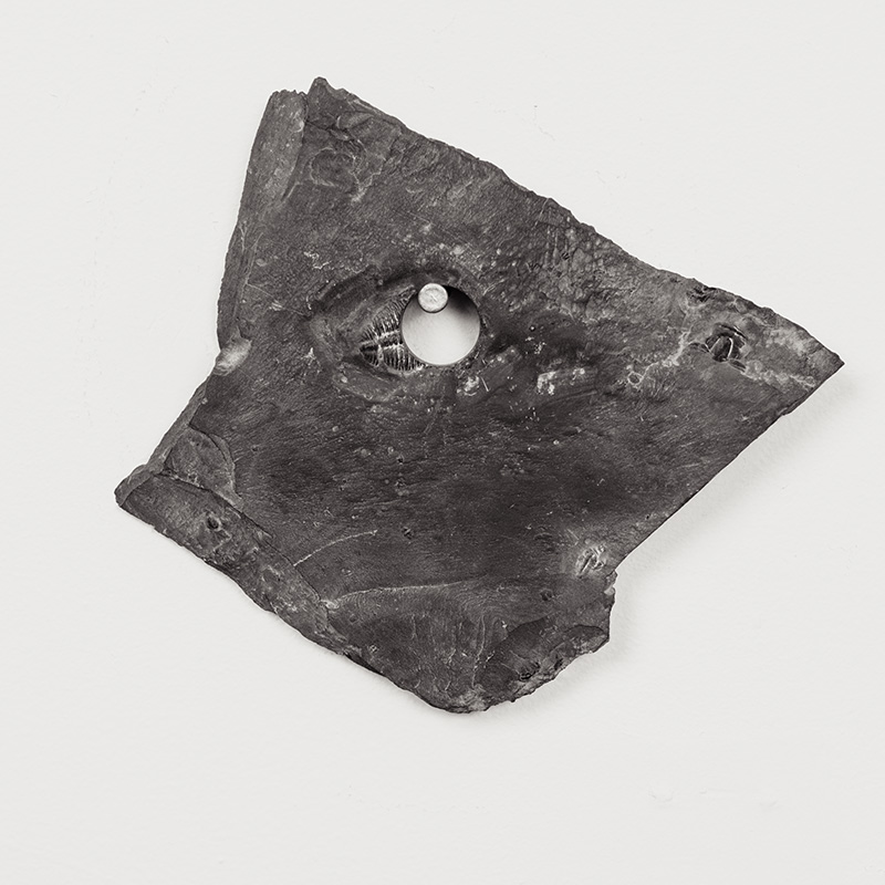 Fossils09.jpg