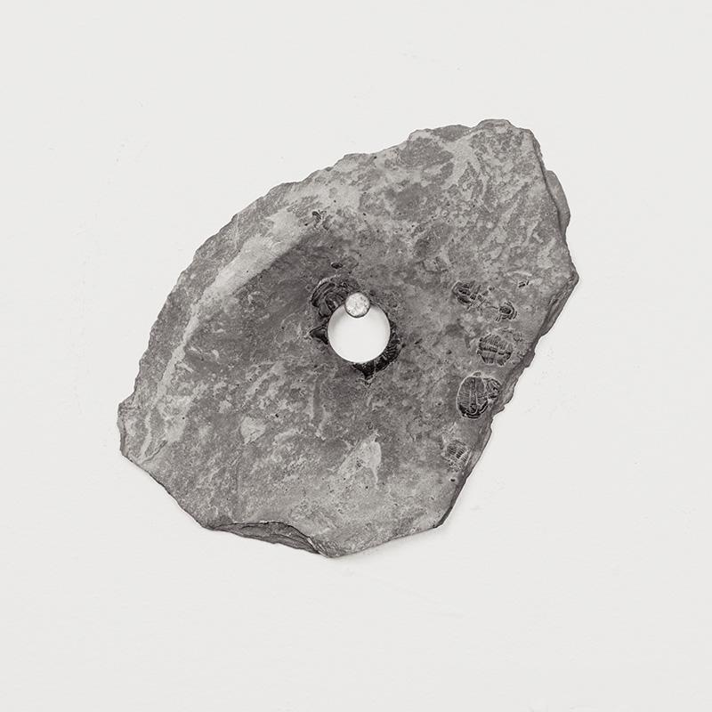 Fossils06.jpg