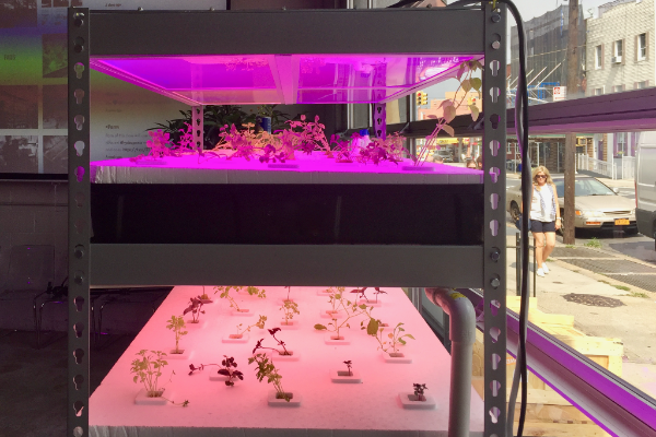 Light Polymers' Alpha Growblade lights help plants thrive by replicating the specific spectra.