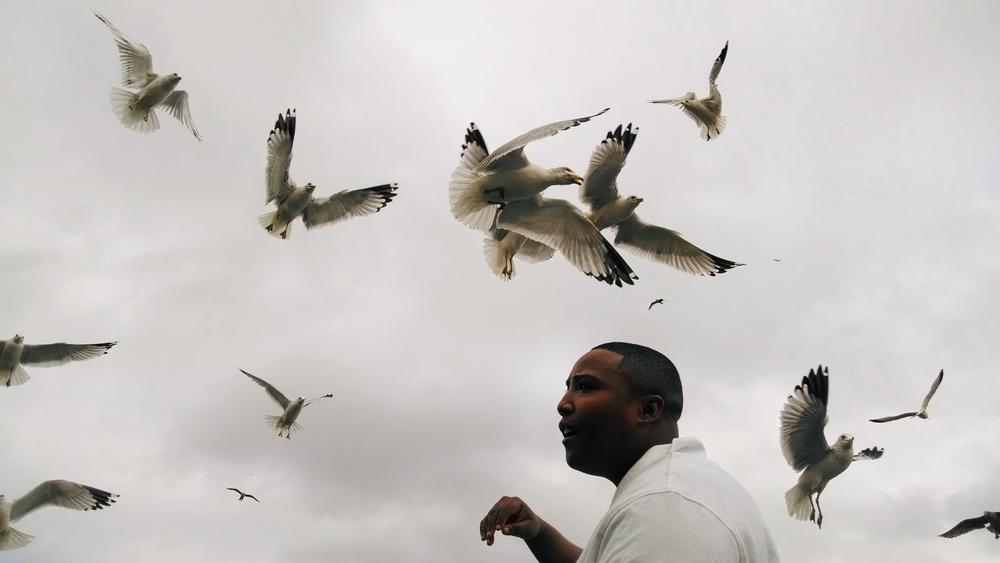 14 - Seagulls.jpg