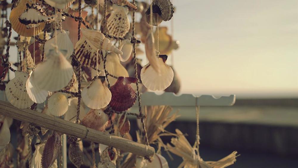 Hanging Shells 1/2
