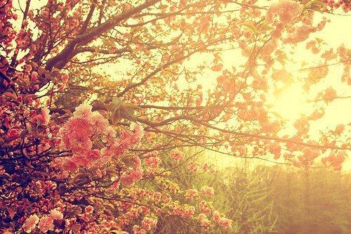 flowers-sunshine-vintage-favim-com-261607_original.jpg