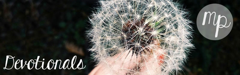 devotionals-dandelion.jpg