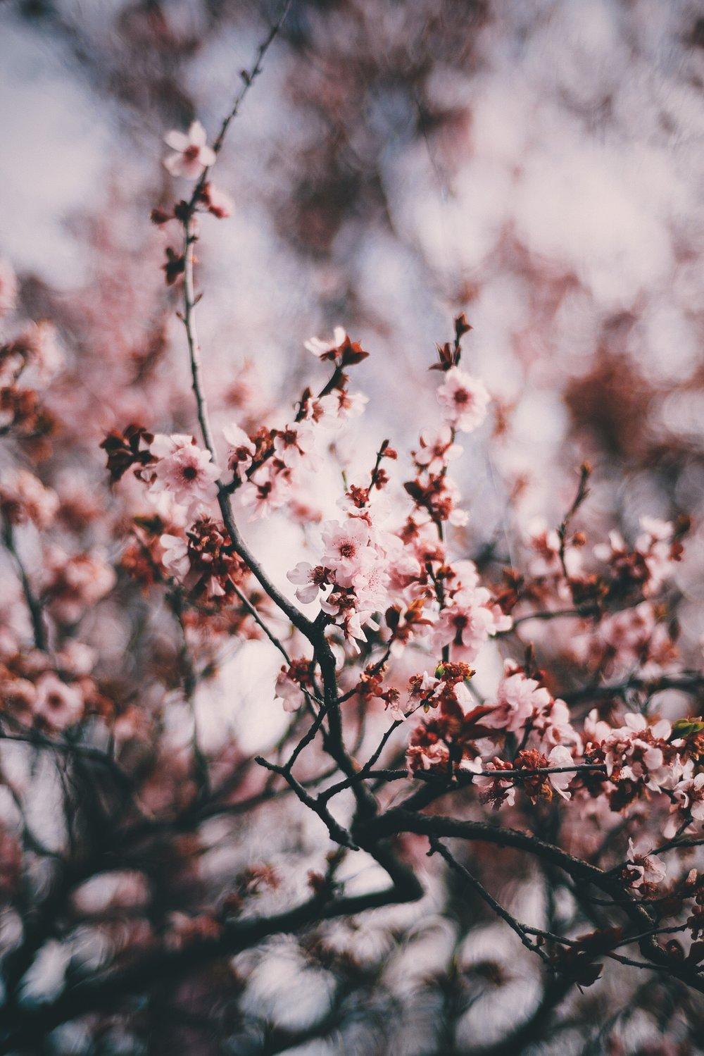 Vinh Pham - @fluffpiece (Floral Wallpaper) 2.JPG