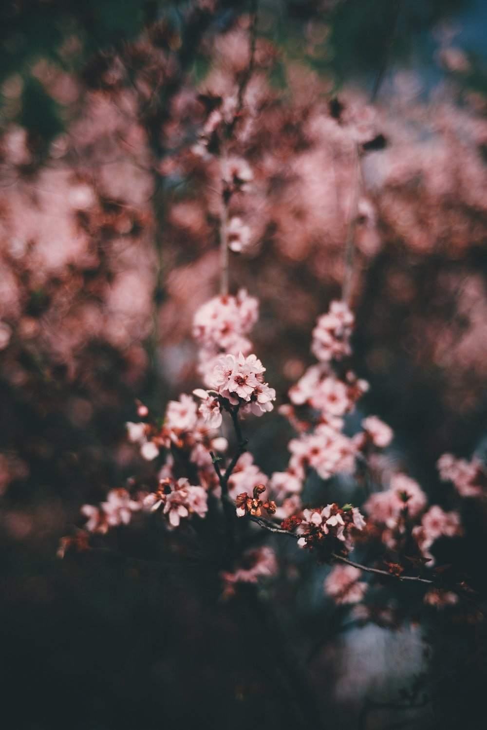 Vinh Pham - @fluffpiece (Floral Wallpaper) 4.JPG