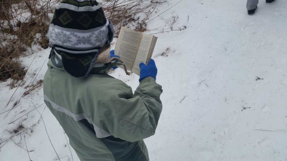 Using a field guide to identify and learn more about birds