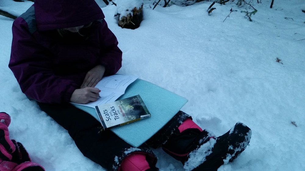 A student creating a species account of a snowshoe hare, after having found and identified its tracks