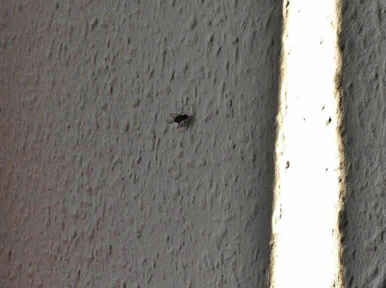 9am  My flatmate, Eddie the Fly