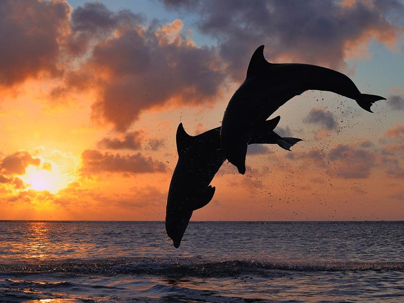 Calabash_Roatan_Activities_Dolphins.jpg