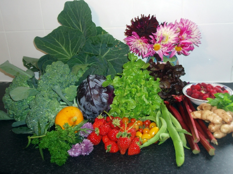 Ample produce from the garden