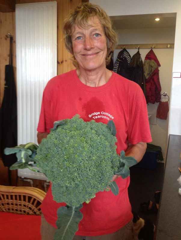 broccoli grows well at doune