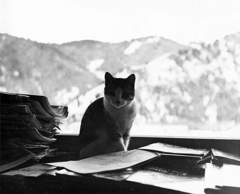 """One of Ernest Hemingway's cats 'Big Boy Peterson' sitting indoors with a view of Baldy Mountain in the background. Ketchum, Idaho,"" Year Unknown.Ernest Hemingway Collection, John F. Kennedy Presidential Library and Museum, Boston."