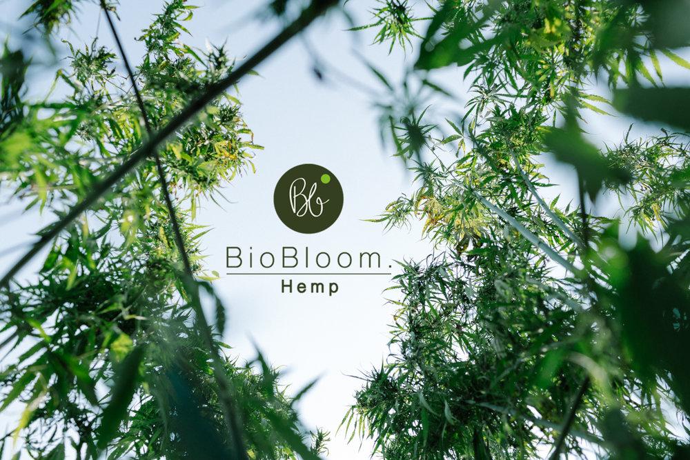 BioBloom_WEB_©NicoleViktorik_02.jpg