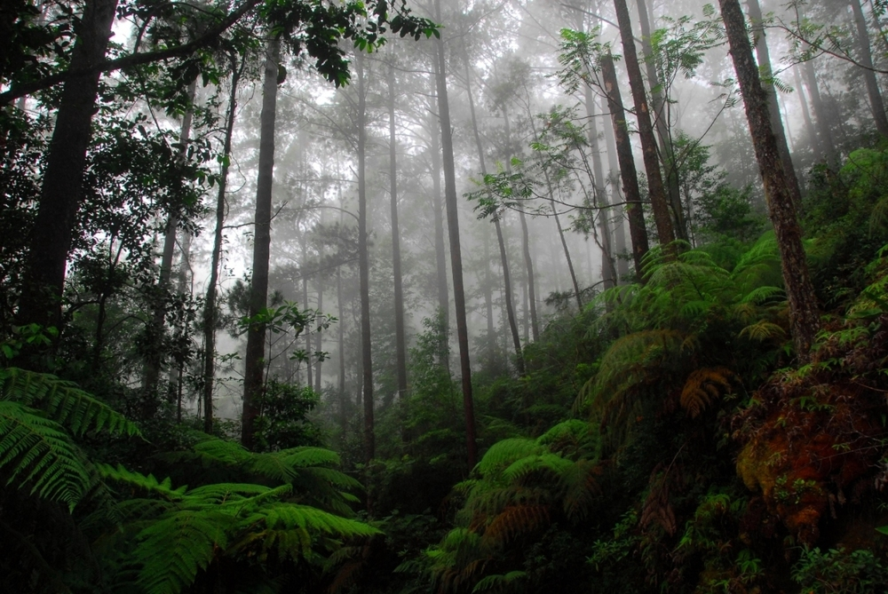Cusuco Cloud Forest 3.jpg