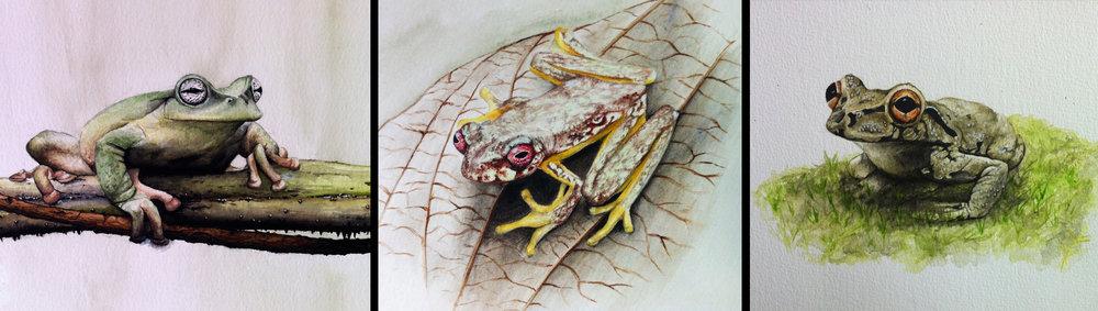 HARCC Frog Triptych     Artist : Katie Garrett •  Website:  www. garrettandgarrett.co.uk  •  Email : katie@garrettandgarrett.co.uk •  IG & Twitter :  @katieggarrett