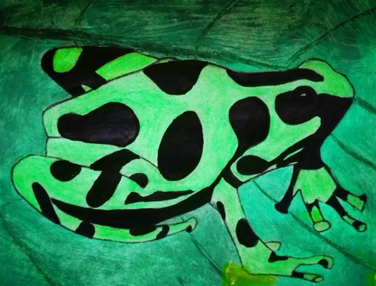 Green Poison Dart Frog    Artist : Hiral Naik  Instagram : @hirals_hive  Twitter : @HiralNaik25  Website :  www.hiralnaik.wordpress.com
