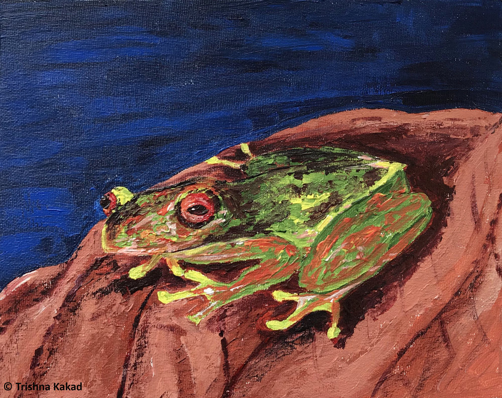 The Endangered Mossy Red Eyed Frog | Acrylic on Canvas Board                                                                                    Artist : Trishna Kakad          Instagram :  @trishnakakad          Website :  https://astorybookofmanythings.wordpress.com/