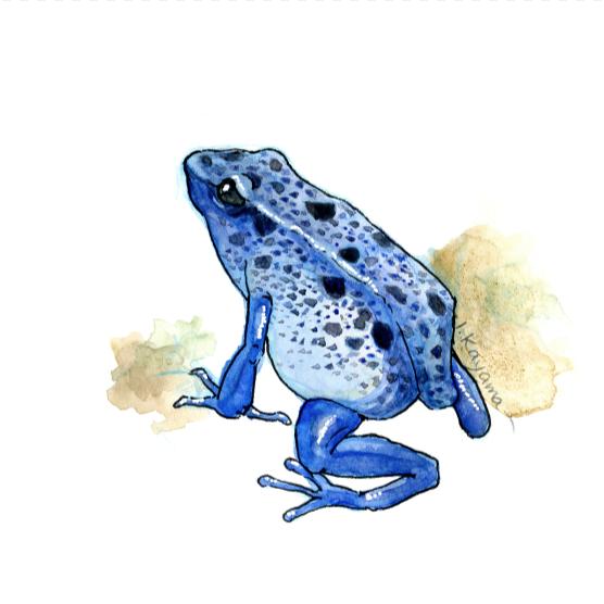 Blue Poison Dart Frog    Artist:  Ikumi Kayama   Instagram & Twitter : @ikumikayama  Facebook :  S  tudio Kayama   Website :  Studio Kayama   Linkedin :  linkedin.com/in/ikumikayama/