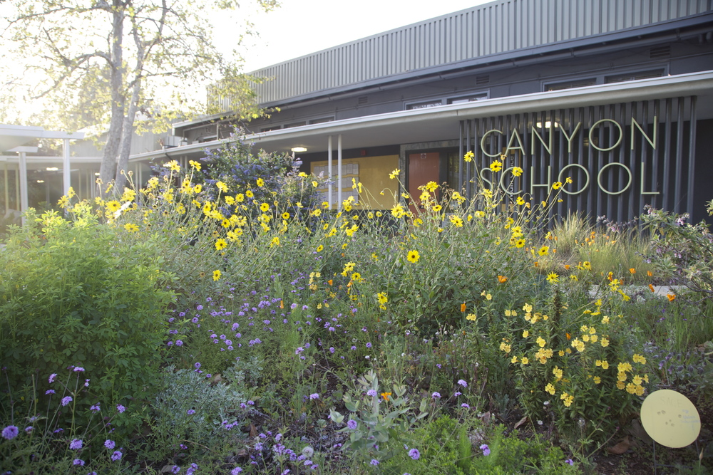 canyon school, ws, yellow flowers.jpg