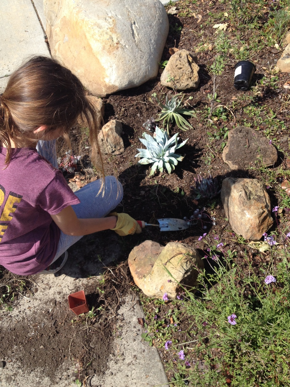 Bibi planting.JPG