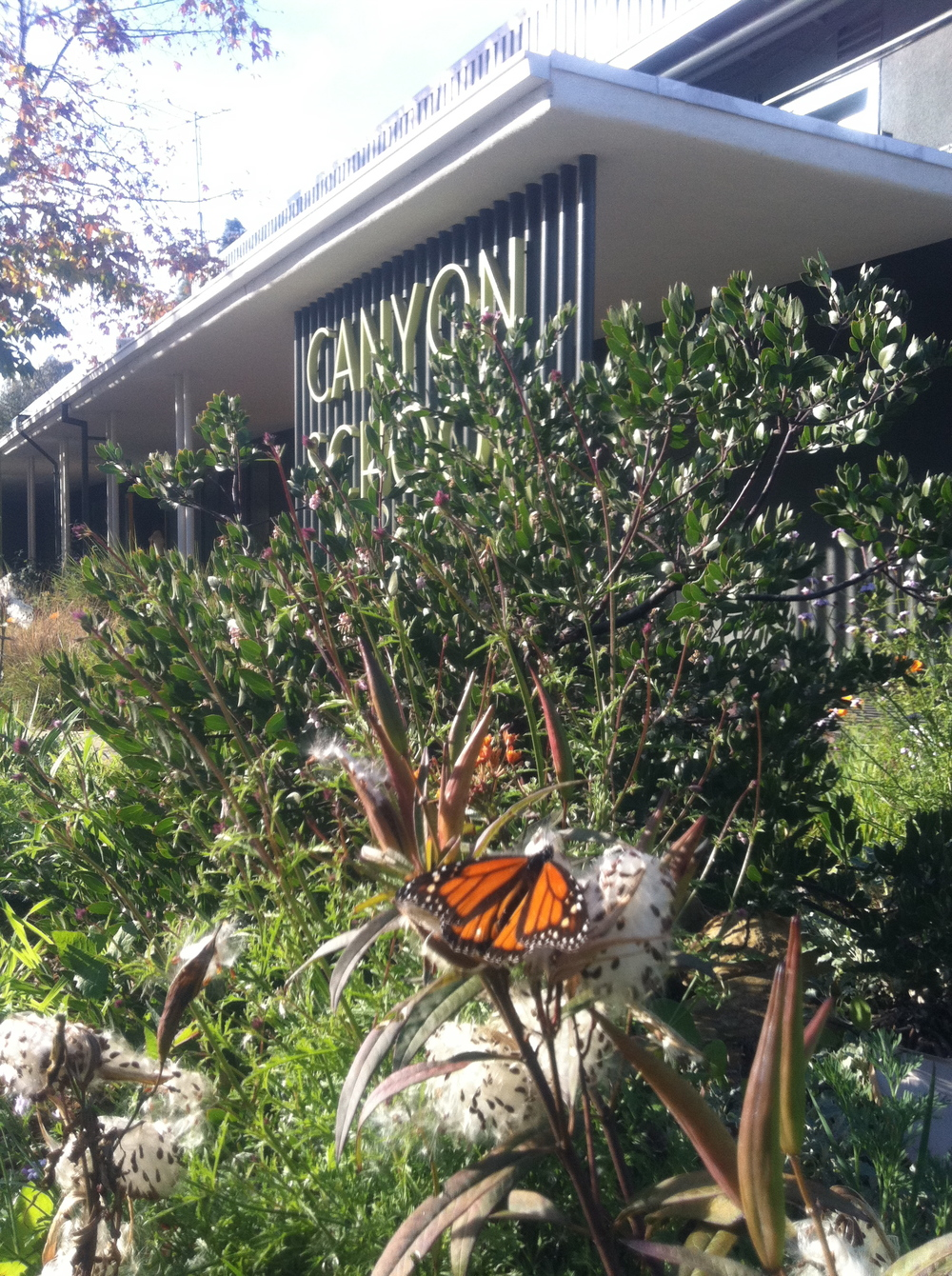 monarch at canyon.JPG