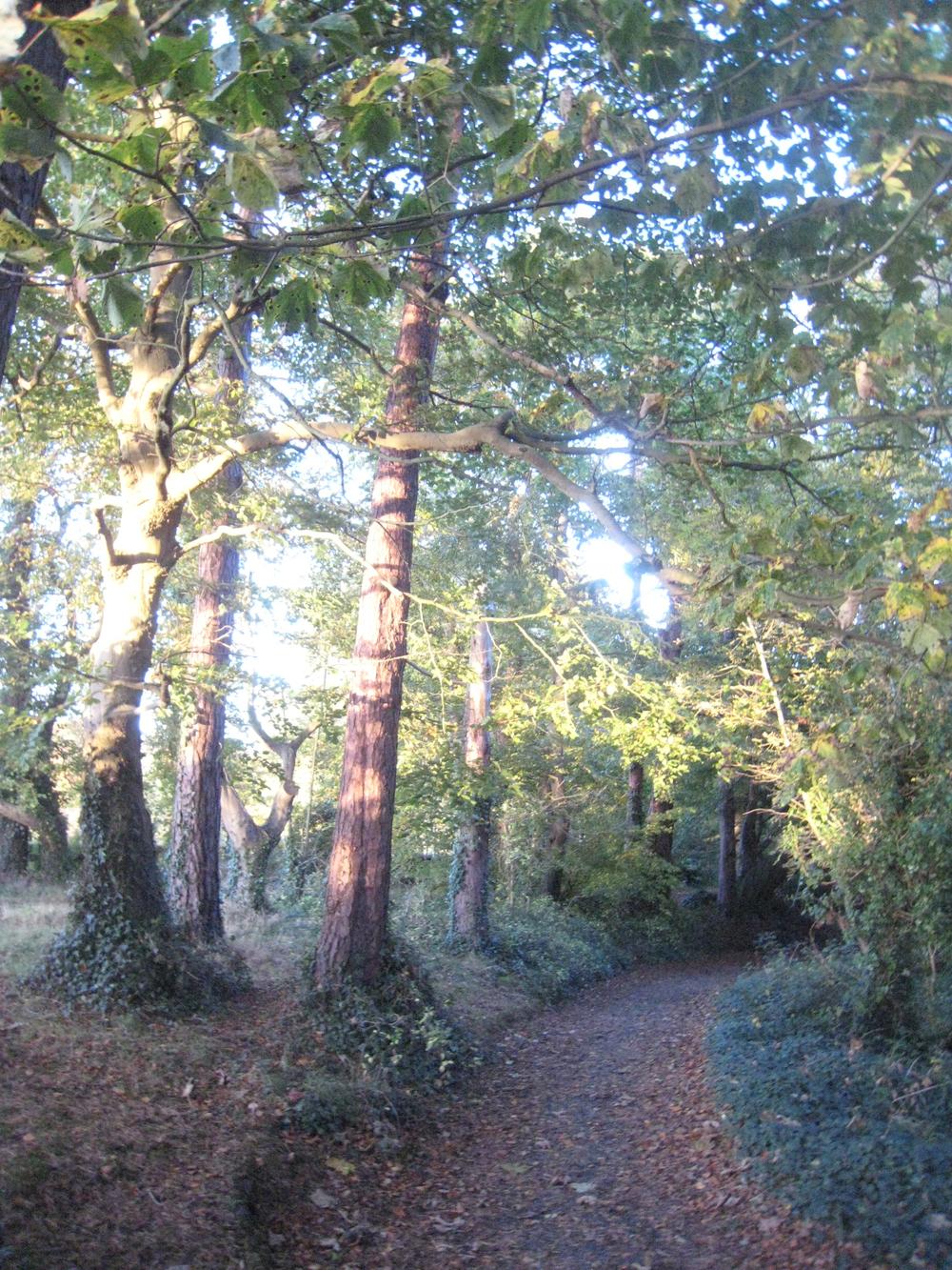 Autumn Woods Near Belfast, Northern Ireland
