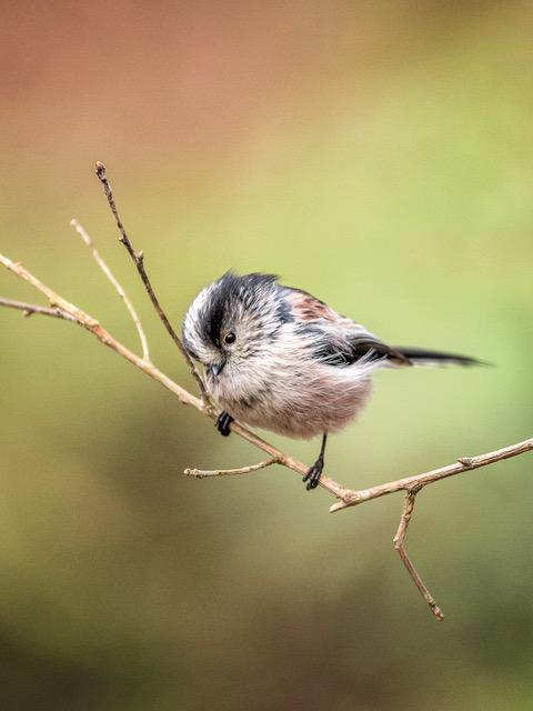 bird7a.jpeg