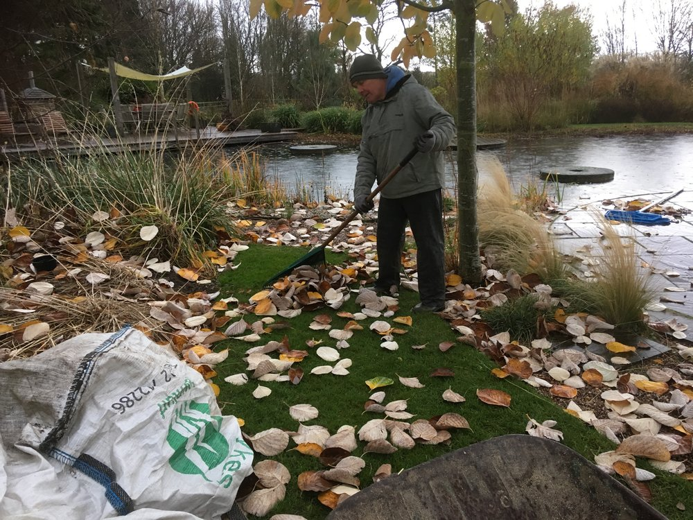 Raking up leaves before they enter the water at Ellicar Natural Pool