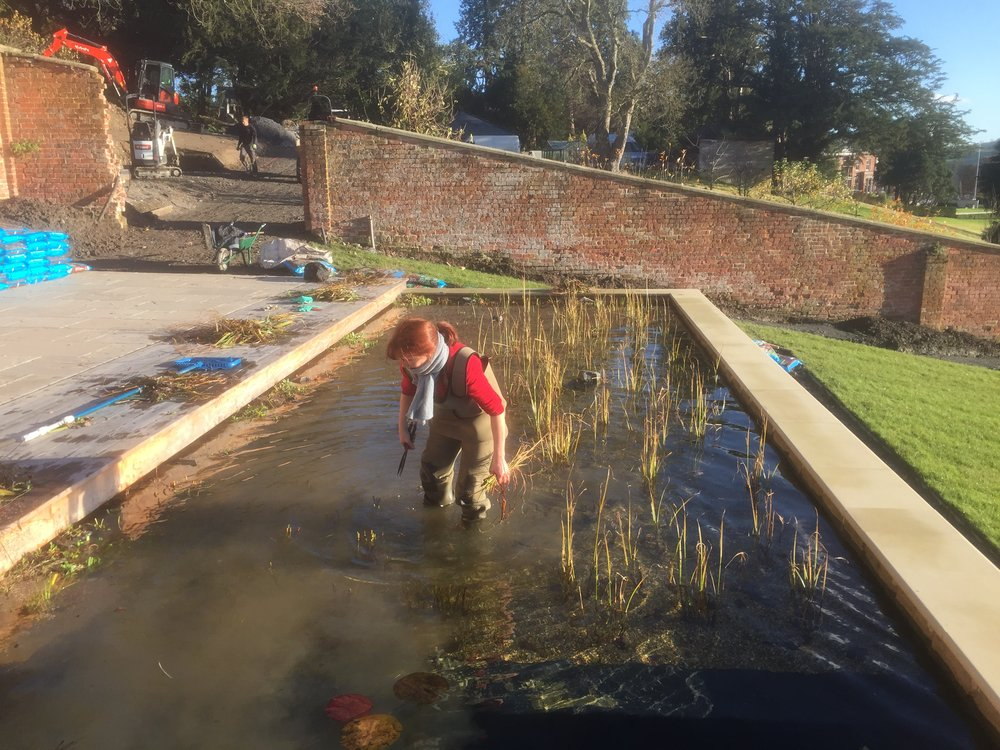 Collecting leaves and cut reeds form a young Natural Pool during Winter Servicing
