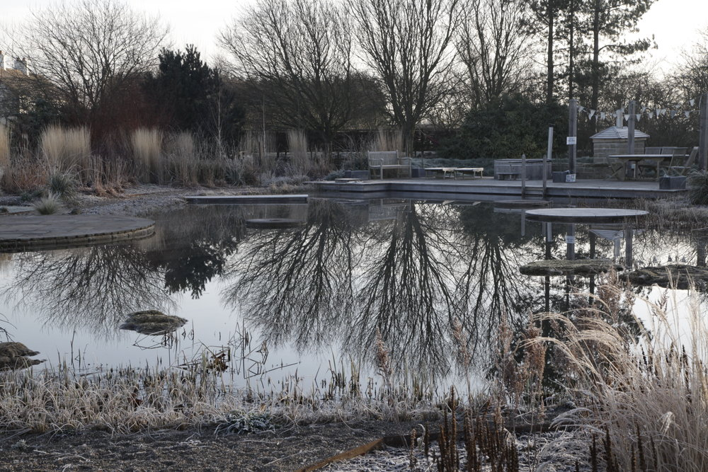 Sky Mirror, our Natural Pool sits at the heart of Ellicar Gardens