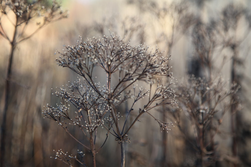 seed heads and grasses left standing weave a sepia tapestry around the gardens and feed our birds in winter