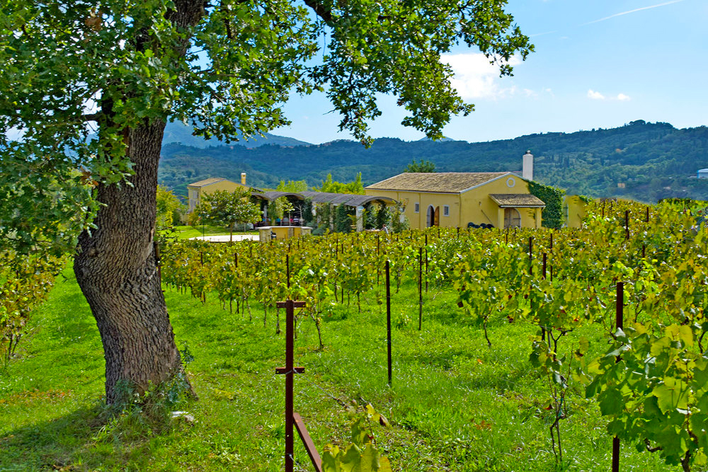 vineyard-2 copy.jpg
