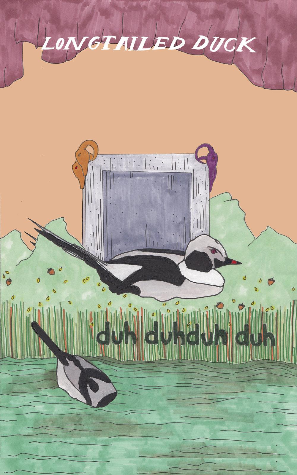 04 longtailed duck emporer.jpg
