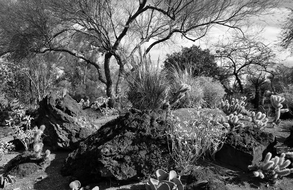 "Chocolate Factory Cactus Garden, 2016 Black and white inkjet print, 13.05"" x 19.8"""