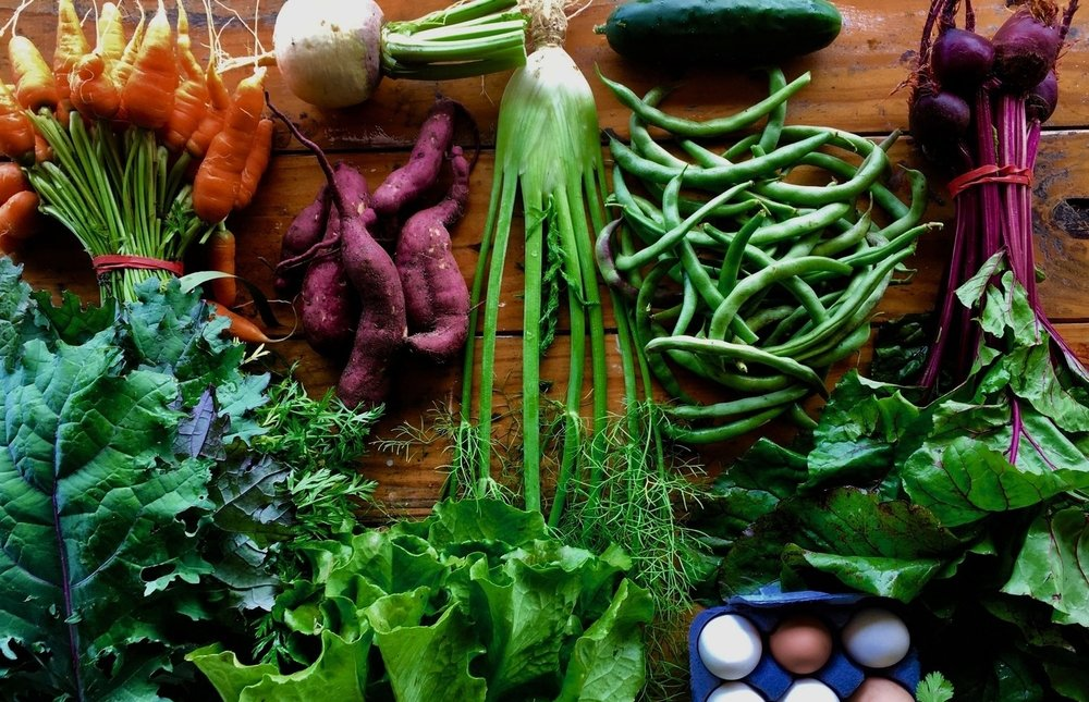 JOIN OUR CSA PROGRAM -