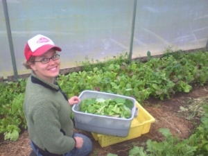 Harvesting salad greens at the farm in Oregon, 2010