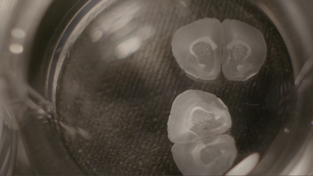 A couple stills from the film. Come see the finished piece at the exhibit.