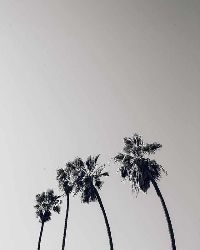 🌴 I think 2019 will be the year where we give up captions? I hate writing them 👋🏻 🤞🏼 #blackandwhite #losangeles #palmtrees #photooftheday