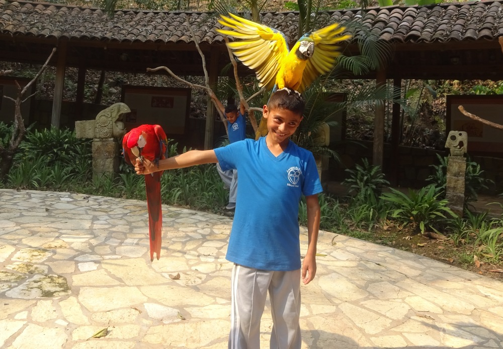 Holding the Honduran national bird - the macaw ('guacamaya') - at the Amigos school field trip to Copan Ruinas in April