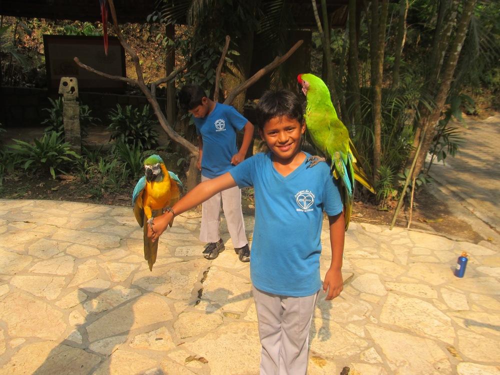 Diego posing with the guacamayas in Copan Ruinas, Honduras, on last year's school field trip.