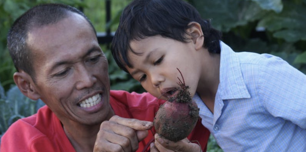 Haiqal and dad inspect a purple beet