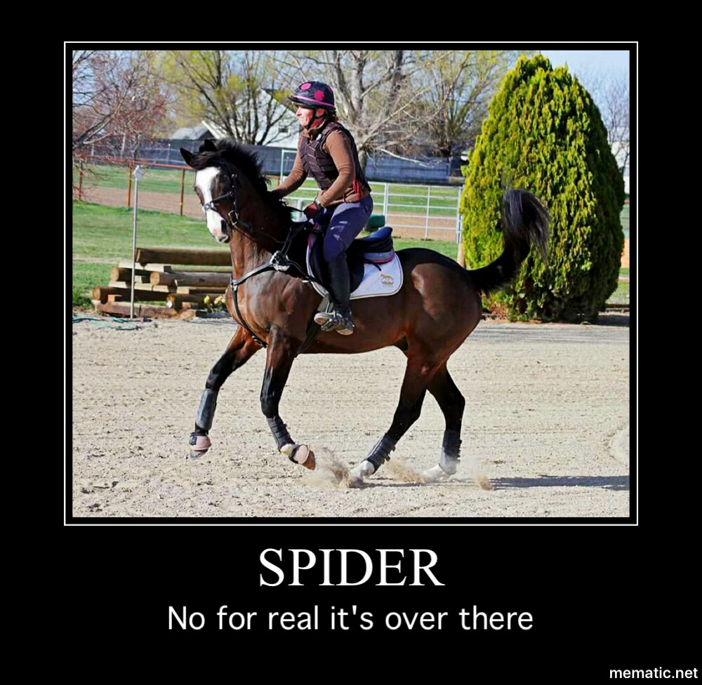 I'm not scared of spiders, but I seem to attract friends who are