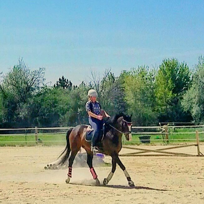 Sitting trot and tracking up, booyah